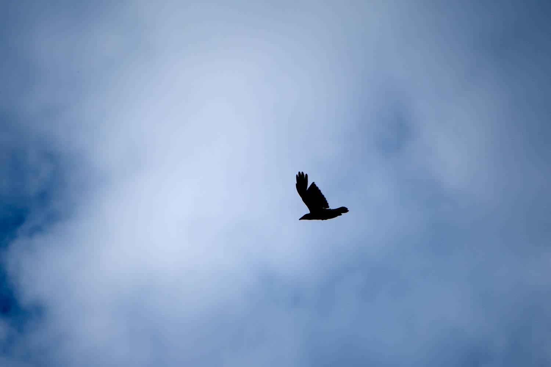 The Broken Raven 2