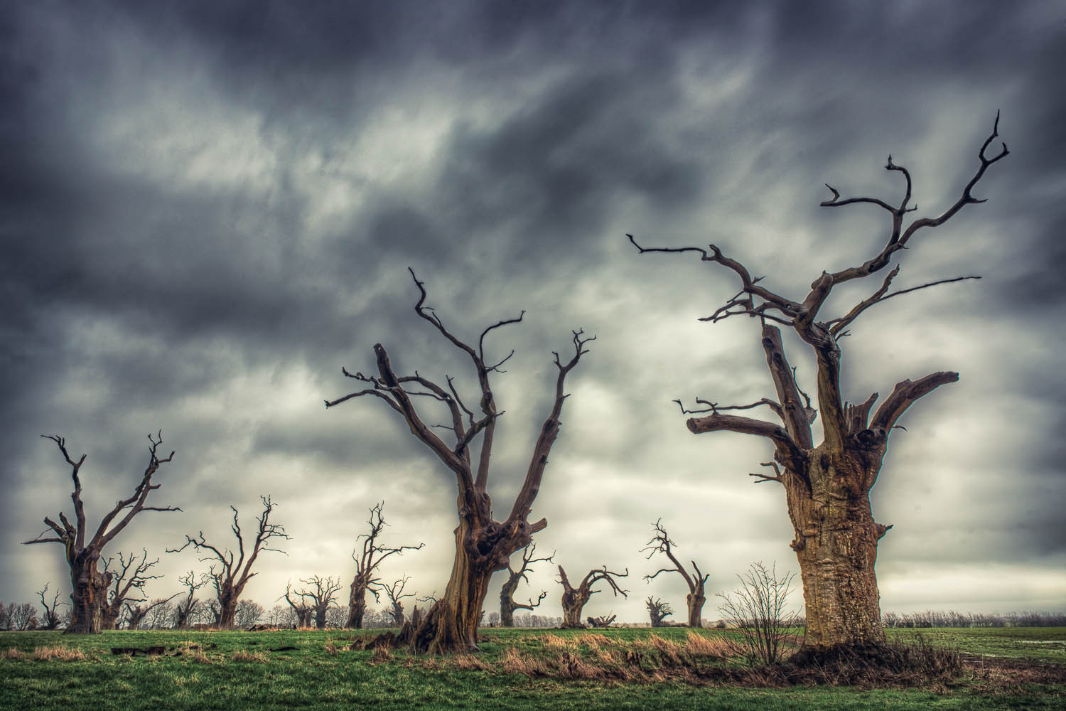 The Dead Trees of Mundun, Essex