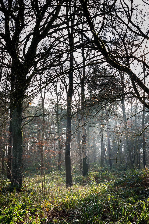 Woodland Light 3