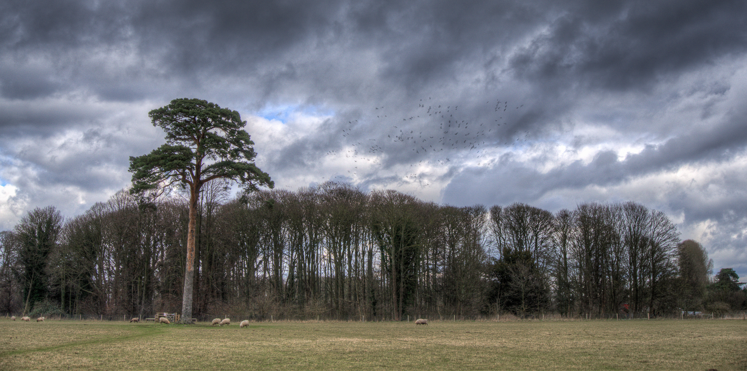The Crows Gather