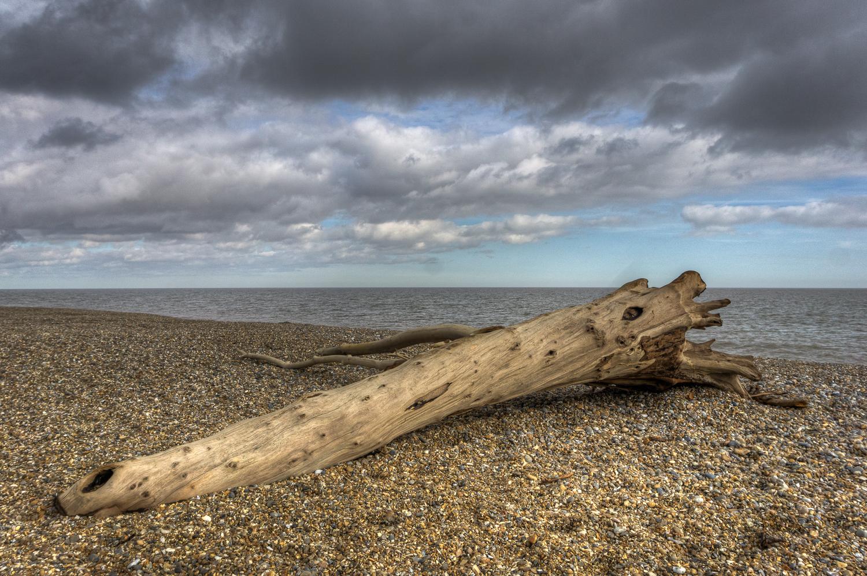 Driftwood on Aldeburgh Beach