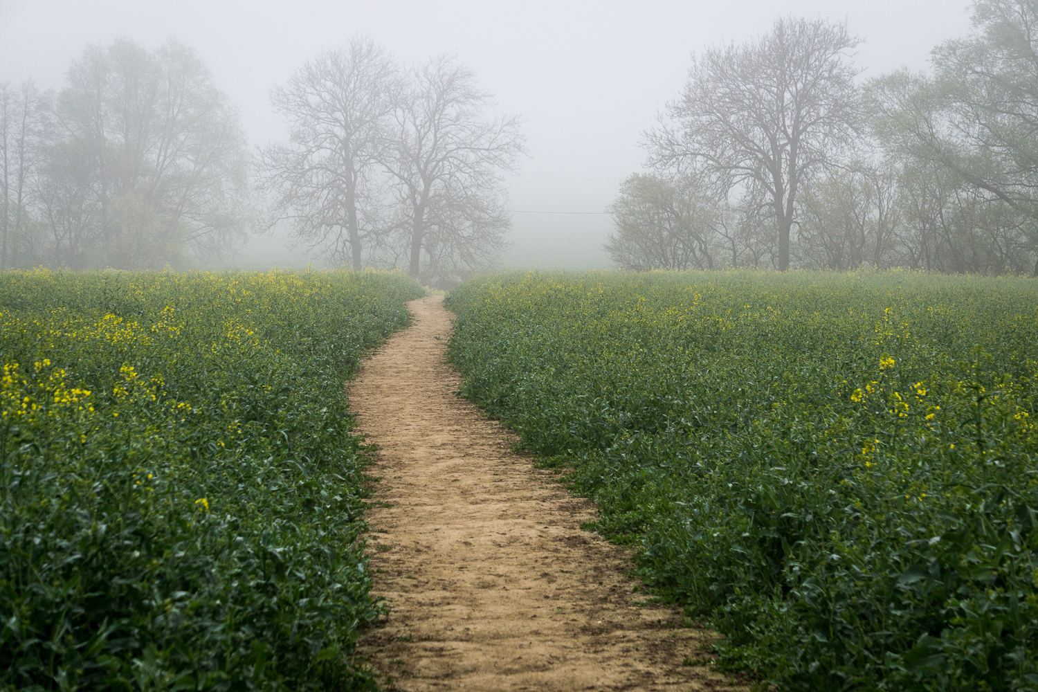 The path well travelled...into the mist