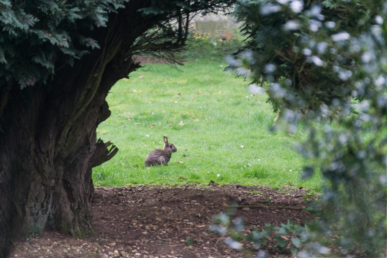 Bunny in the Graveyard.