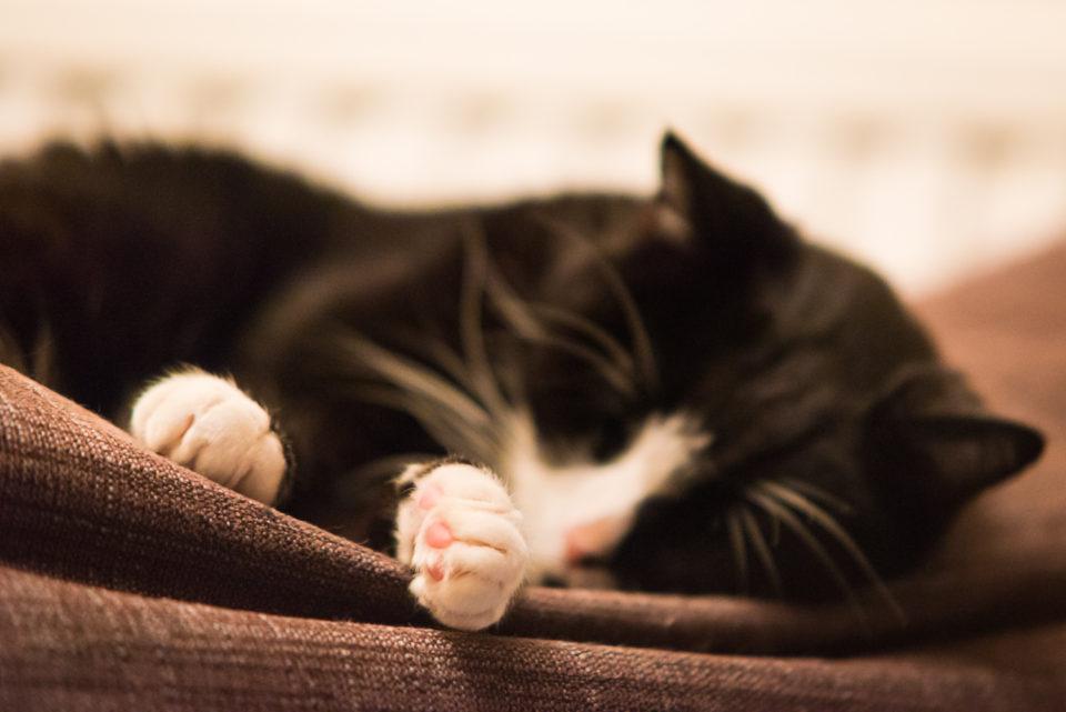 Sleepy Paws
