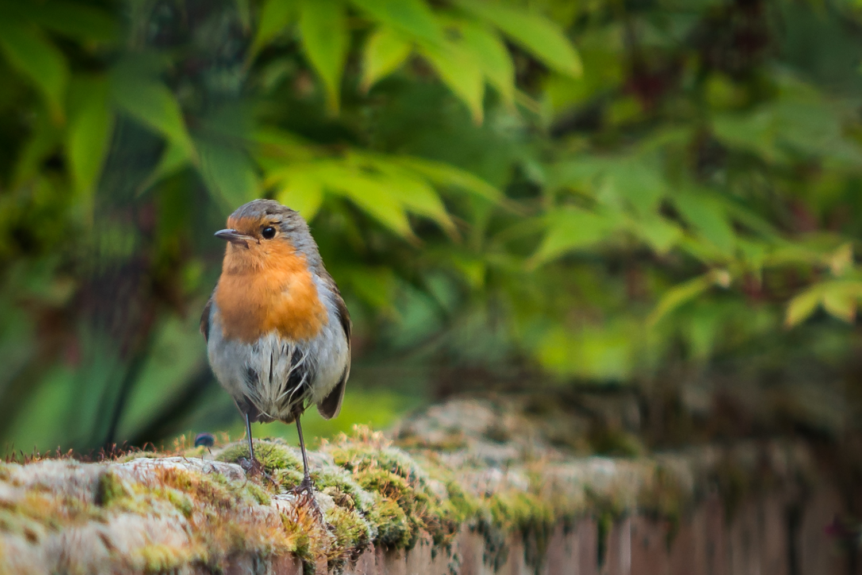 Mr Robin needs a brush up