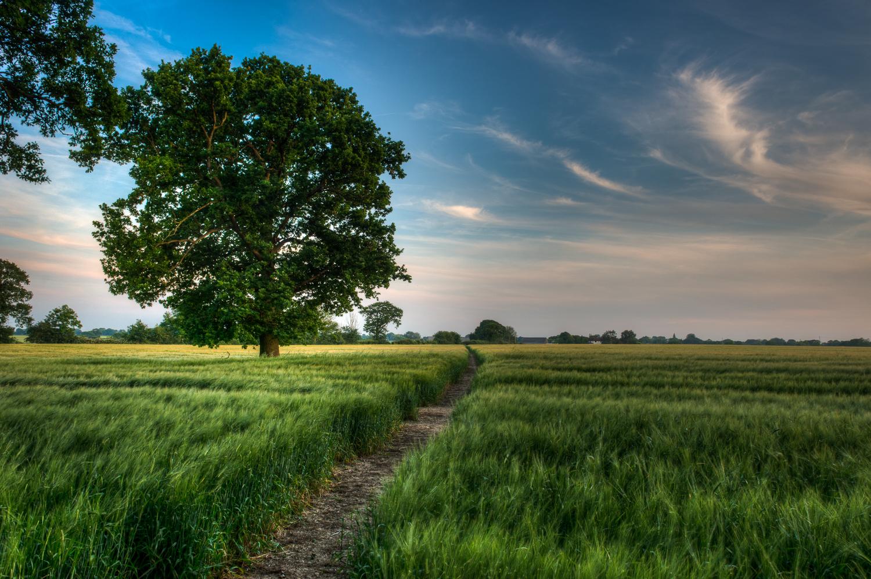 A Path Through the Barley