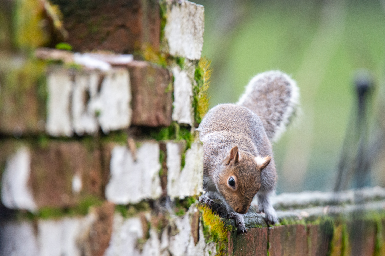 Looking For Nuts