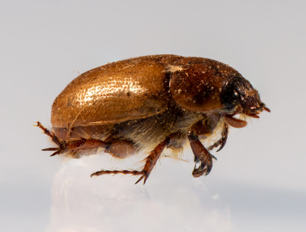 Side view of the bug