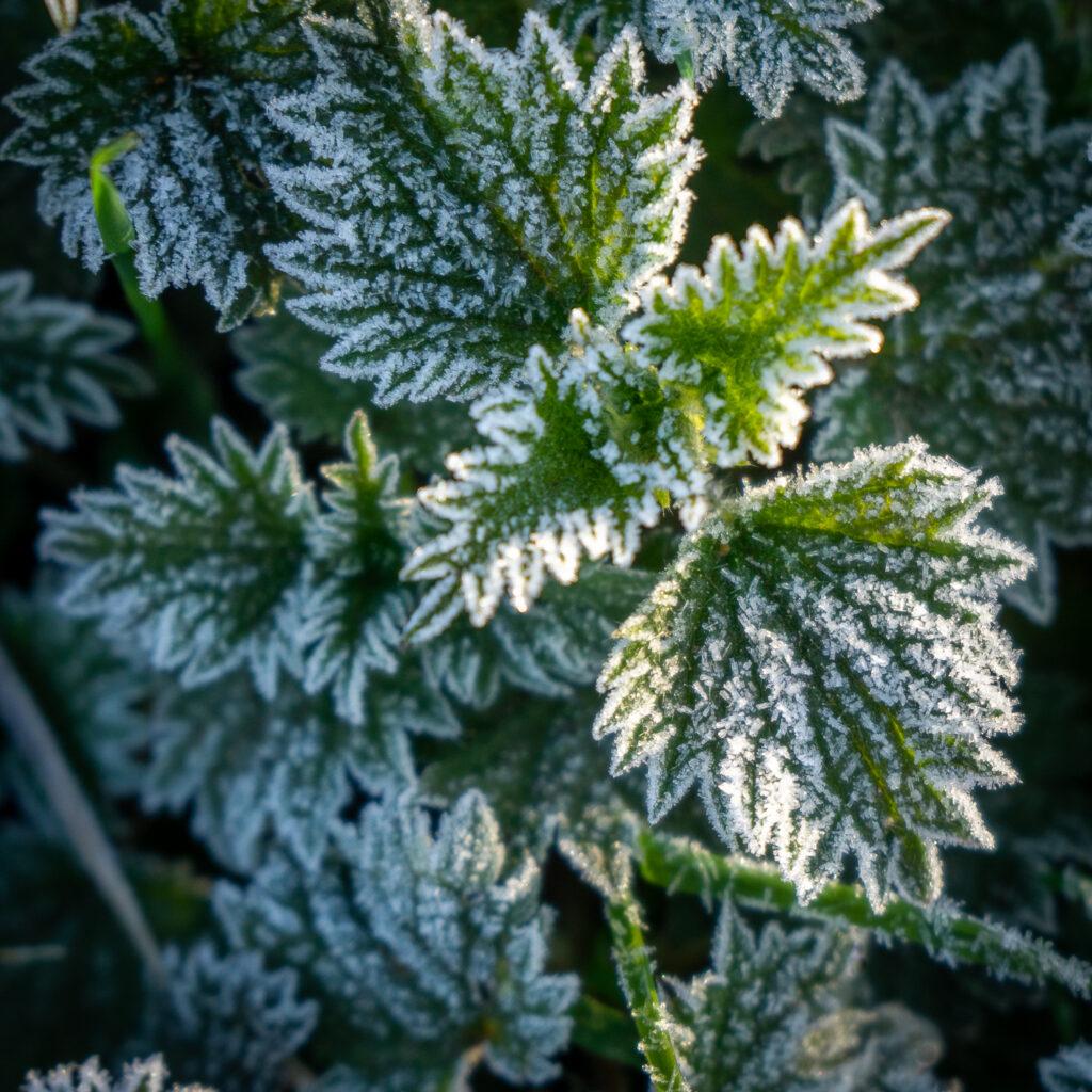 Frosty Edges