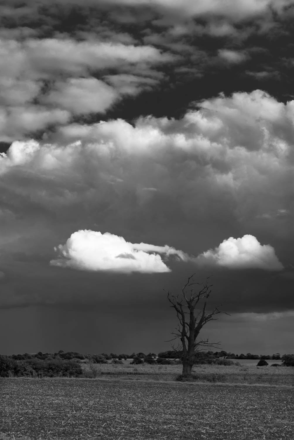 A black and white photograph of a plowed field, clouds and a dead tree in Matching, Essex