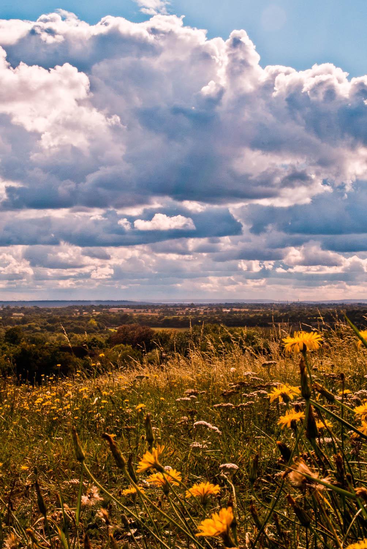 Danbury View