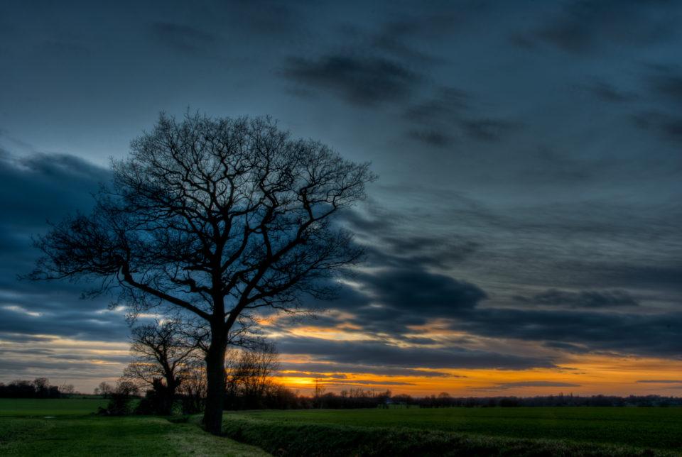 Berners Roding Sunset