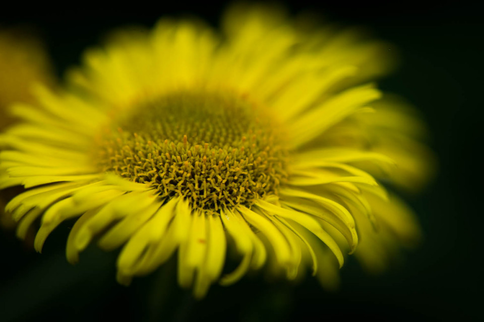 A Wild Flower photographed in the Dunmow Cutting