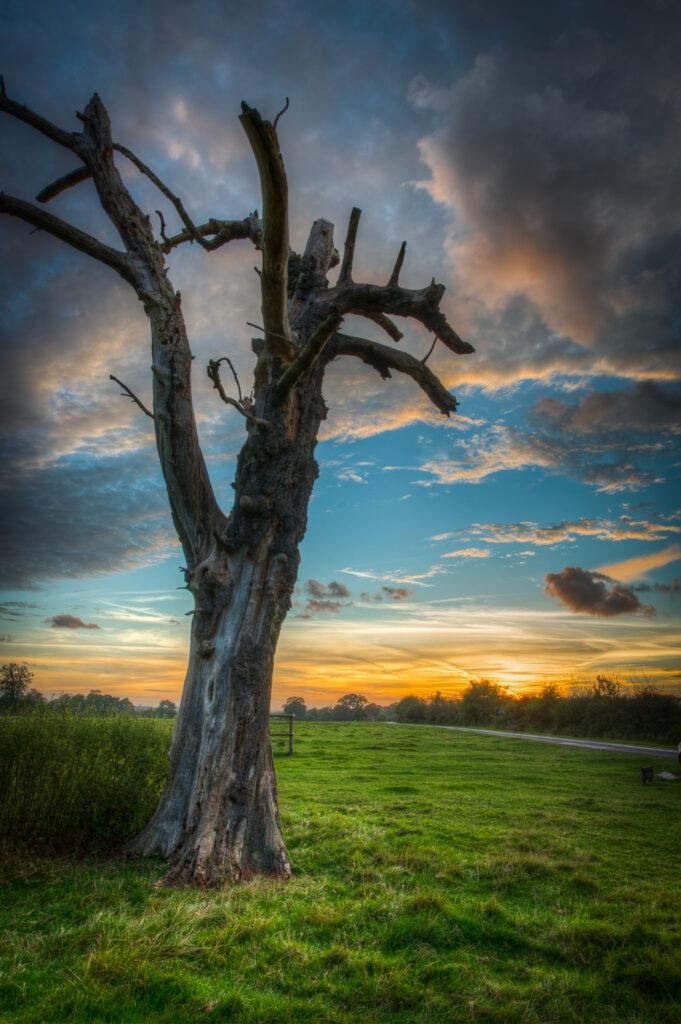 Hatfield Forest Sunset
