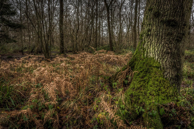A Wet Winter in Rowney Woods, Debden, Essex