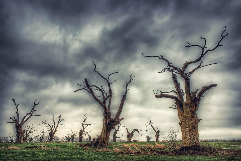 The Dead Trees of Mundun, Essex
