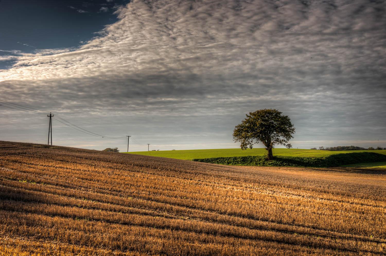 Curvacious Landscape