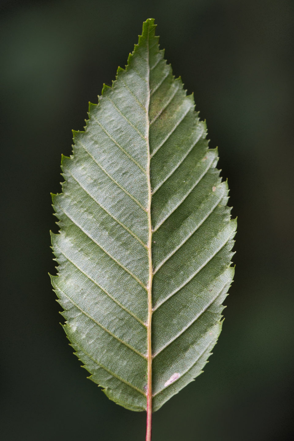 The lines and curves of a leaf