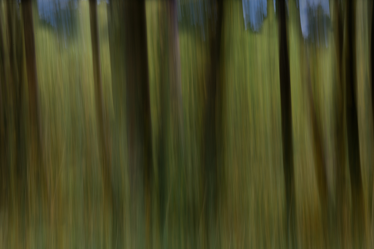 The Trees in the Woods