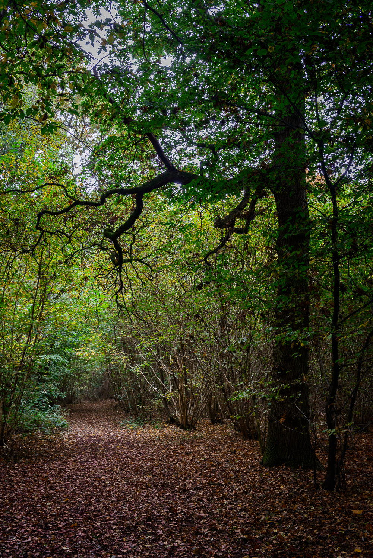 Garnetts Wood in Autumn