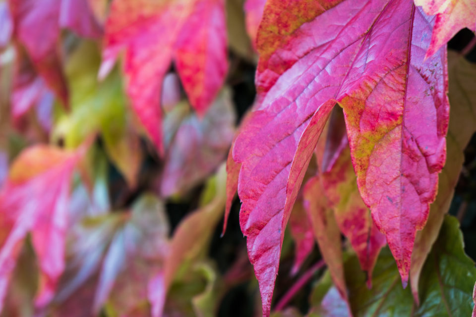 Red Green Yellow - The Colours of Autumn