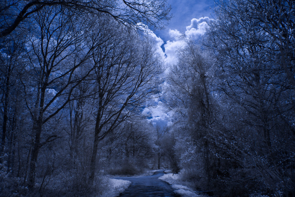 Rowney Woods IR