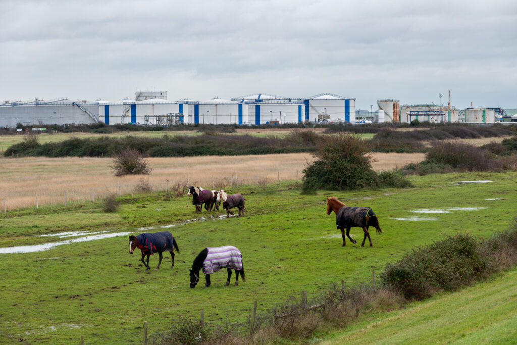 Canvey Horses