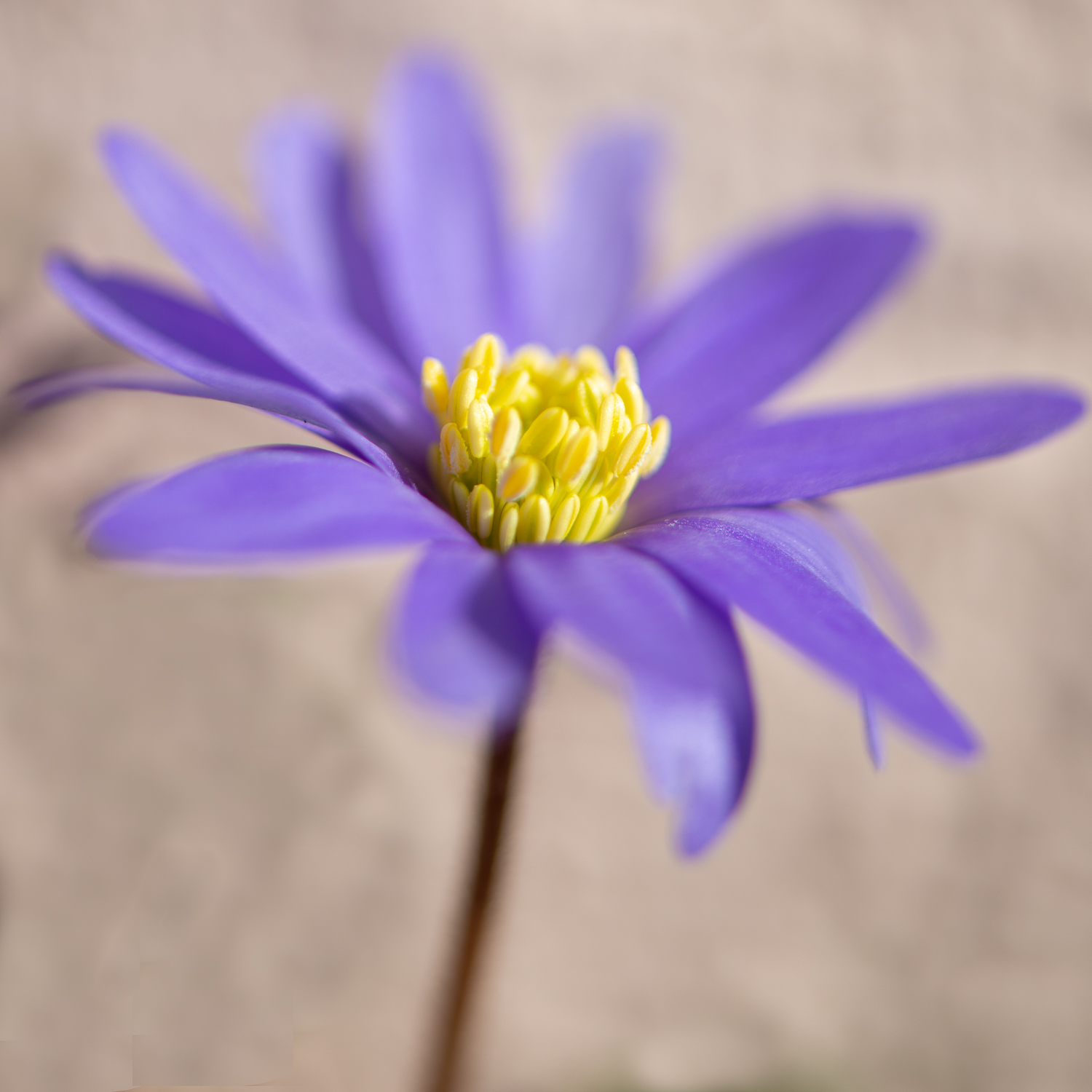 For your clothes, here's a pretty flower
