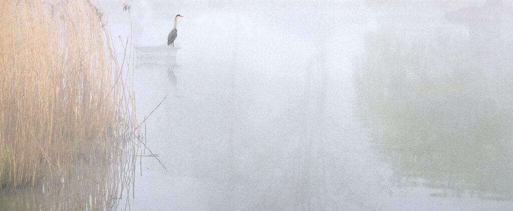 A Foggy Start on Doctors Pond