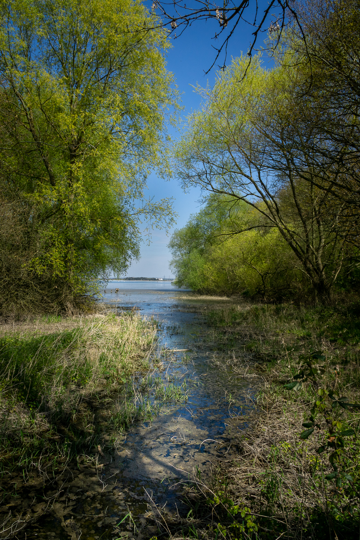 A View of Hanningfield Reservoir