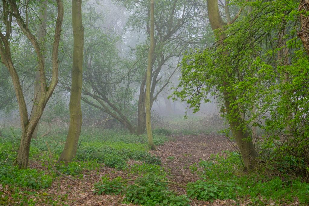A misty copse