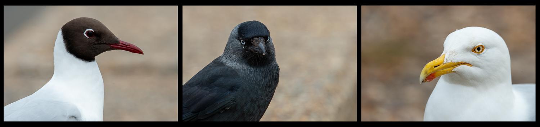 The Birds on Aldeburgh Beach