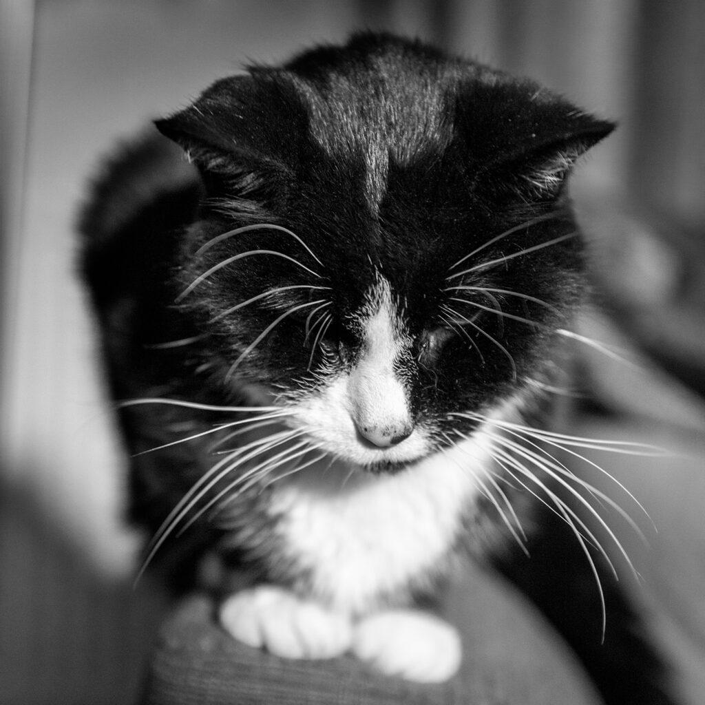 120-365v4 Moody Cat