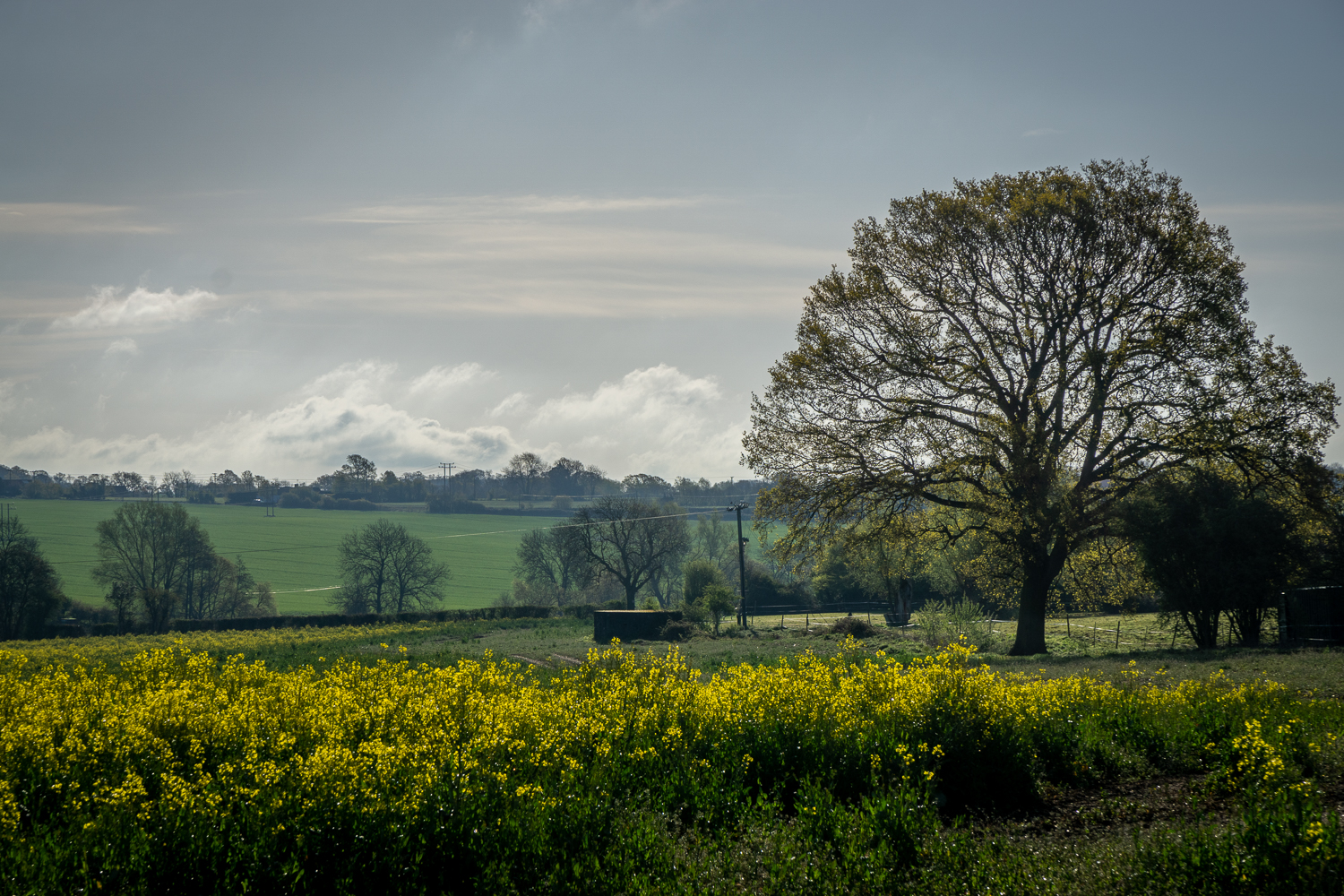 Rapeseed on Beaumonts Hill