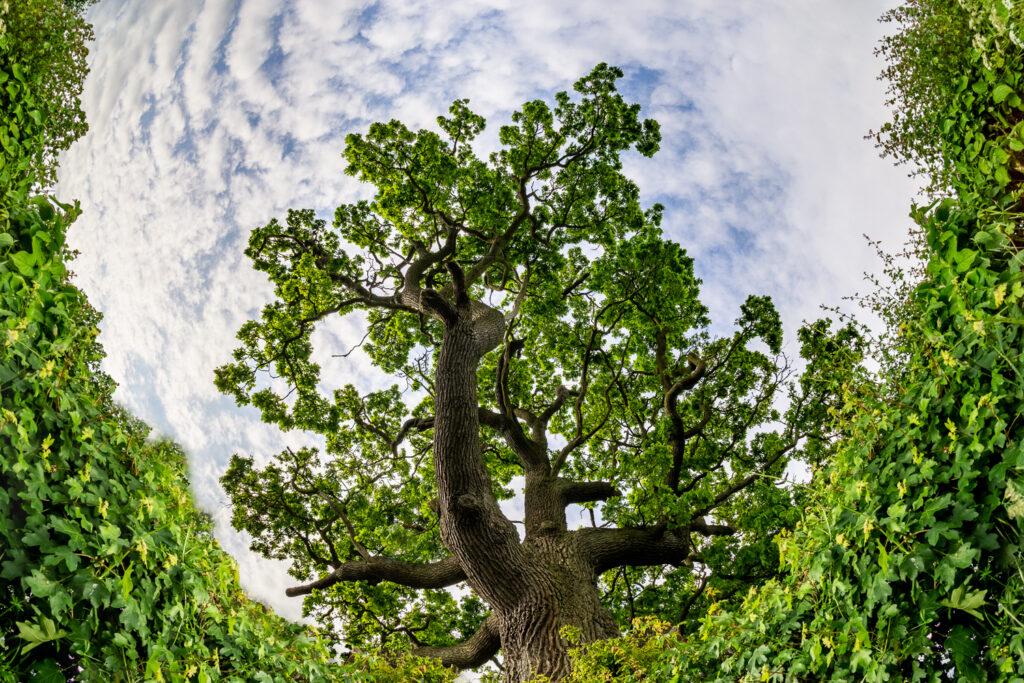 Surrounding the Tree
